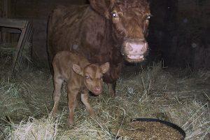 Windsor Farm - beef