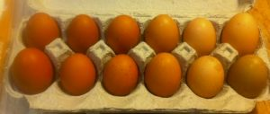 Cricket Farm eggs