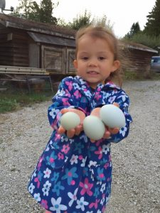 Shepherd's Purse Farm eggs