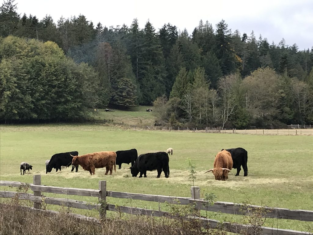 Ruckle Heritage Farm Beef