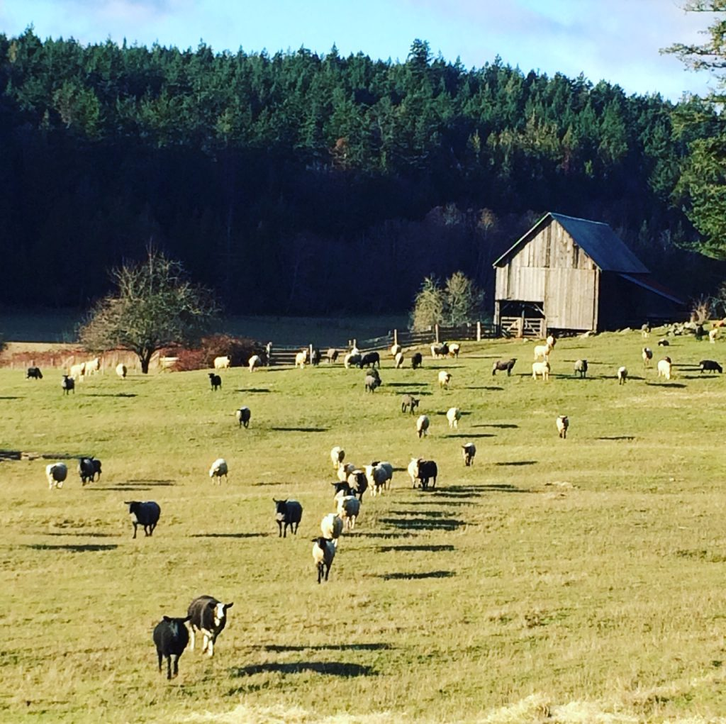 Ruckle Heritage Farm Lamb
